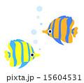 熱帯魚 15604531
