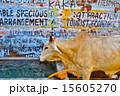 インドの牛 15605270