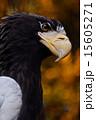 大鷲 15605271