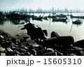 幻影 15605310