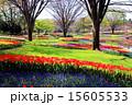 チューリップ畑 昭和記念公園 国営昭和記念公園の写真 15605533