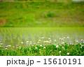野原 植物 花の写真 15610191