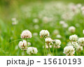 植物 花 春の写真 15610193