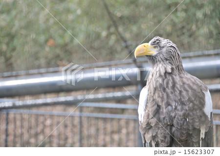 鳥 15623307