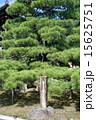 「熊谷 よろひ(鎧)かけ松」の石碑(金戒光明寺/京都市左京区) 15625751