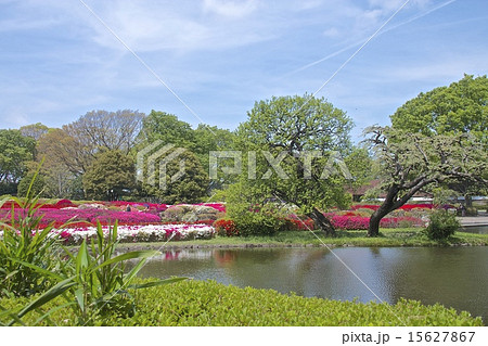 神代植物公園 15627867