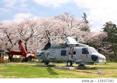 米海軍厚木基地のアライアンスパークに展示されているSH-60Bシーホーク対潜ヘリと満開の桜 15637381