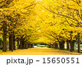 昭和記念公園の秋 15650551
