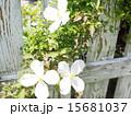 白い花 15681037
