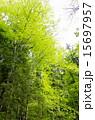 新緑 木洩れ日 15697957
