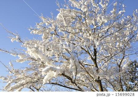 着雪の写真・イラスト素材              1ページ目