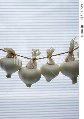 初夏の収穫 新にんにくの写真素材 [15701909] - PIXTA