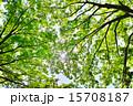 森 太陽光 新緑の写真 15708187