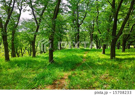 新緑の森と小道 15708233