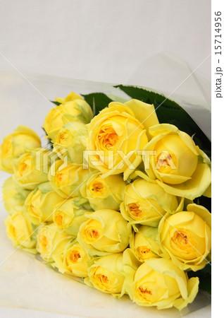 黄色いバラ(カタリナ) 15714956