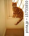 動物 猫 ペットの写真 15733850