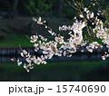 水辺 植物 桜の写真 15740690
