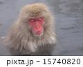 地獄谷野猿公苑 ニホンザル 15740820