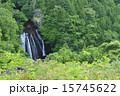 王滝 自然 森林の写真 15745622