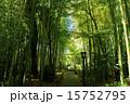 修善寺 竹林の小径 春の写真 15752795