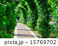 小道 葉 道の写真 15769702