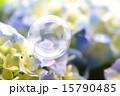 シャボン玉 紫陽花 花の写真 15790485