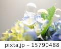 シャボン玉 紫陽花 花の写真 15790488