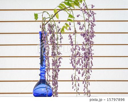 藤の花の生け花 15797896