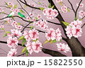 描画 樹木 樹のイラスト 15822550