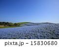 ネモフィラ みはらしの丘 国営ひたち海浜公園の写真 15830680