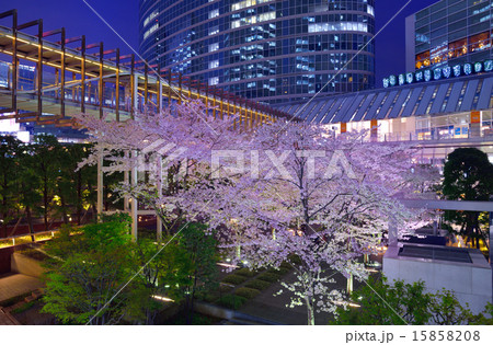 品川インターシティの桜 15858208
