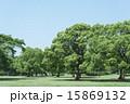 広い 公園 木の写真 15869132