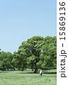 広い 公園 木の写真 15869136