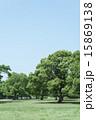 広い 公園 木の写真 15869138