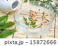 淡水魚 金魚 魚の写真 15872666