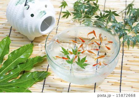 金魚 15872668