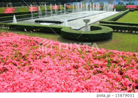 神代植物公園春のバラフェスタ 15879031
