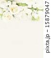 背景 花 ナチュラルのイラスト 15879047