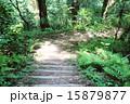 山道の階段 15879877