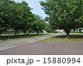 横浜みなとみらいの写真 15880994