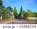 田園調布の銀杏並木(真中) 夏 15886539