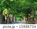 田園調布の銀杏並木(左側) 夏 15886734