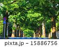 田園調布の銀杏並木(左側) 夏 15886756