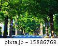 田園調布の銀杏並木(左側) 夏 15886769