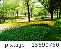 花畑 昭和記念公園 チューリップの写真 15890760
