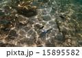 水中 魚 南国の写真 15895582