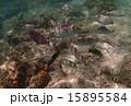 水中 魚 南国の写真 15895584