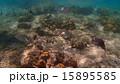 水中 魚 南国の写真 15895585