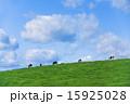 牧場 雲 青空の写真 15925028