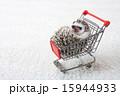 Pet_178 15944933
